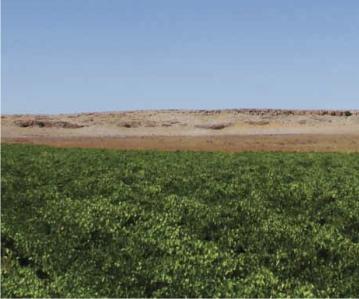 Leleienfontein Wynland September 2011